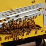 gran lavoro delle nostre api...